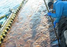 第2回 災害:クラゲ対策